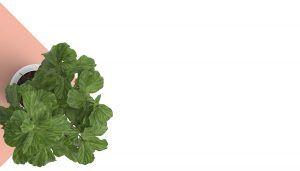 la cote fresh irish produce suppliers top bg