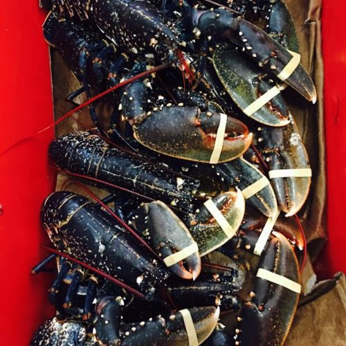 Wexford Lobster